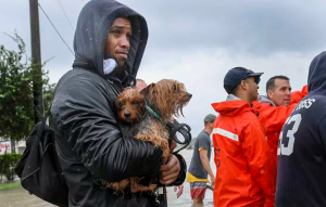 Pets rescued during Hurricane Harvey